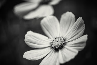 Photo: #monochrome  #bwphotography  #floralphotography  #floralfriday