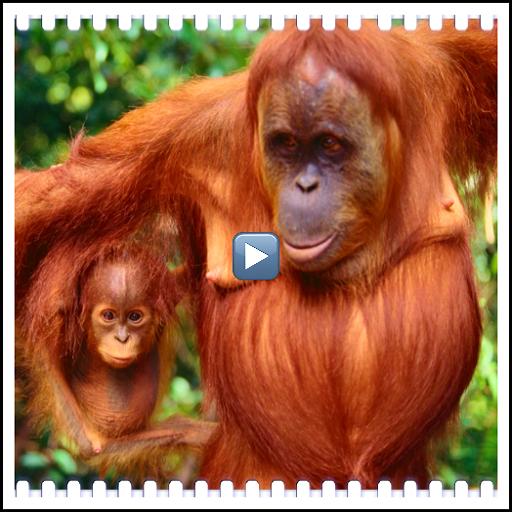 Documentaries wild animals