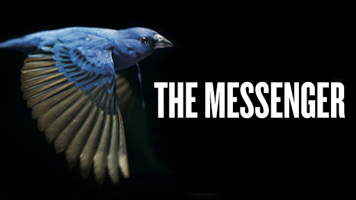 Image result for THE MESSENGER