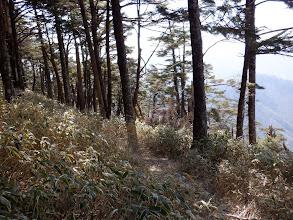 六呂場山方面への踏み跡