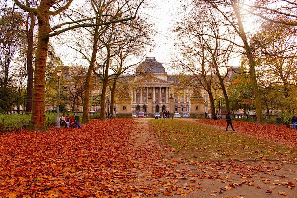 Autunno a Bruxelles di caterina_kitta