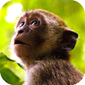 🐒 Monkey Sounds icon
