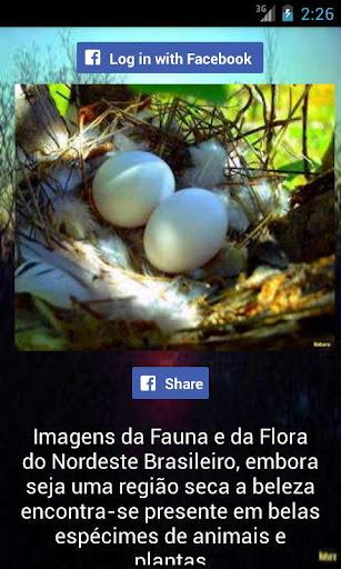 Imagens e Paisagens
