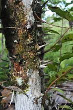 Photo: albero con le spine