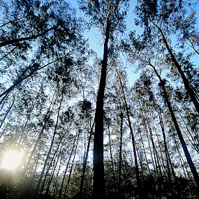 Lost in the Woods by Lealiza Seiler - Landscapes Forests ( forest, woods, anawangin, philippines )