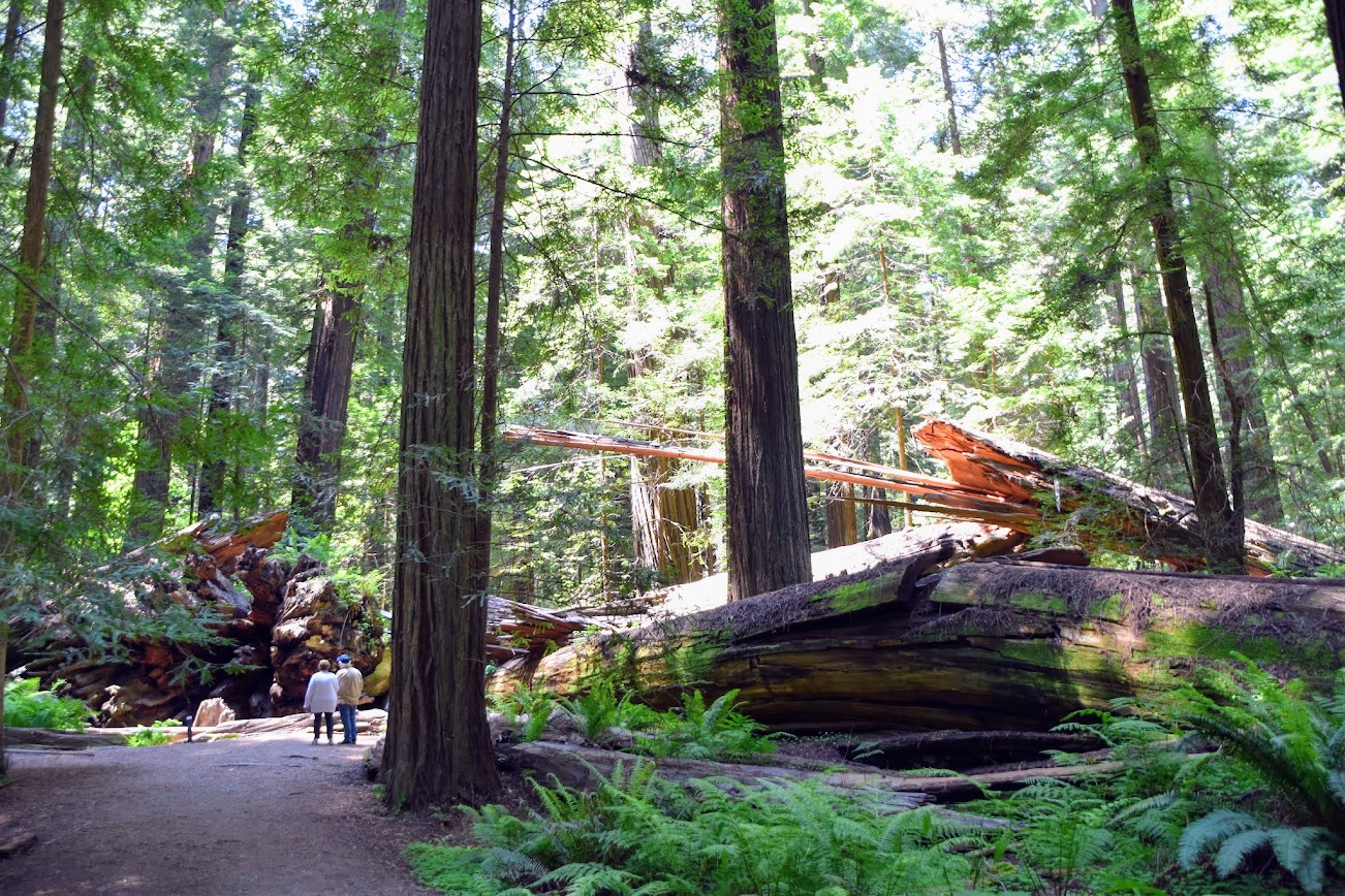 redwood national park california
