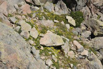 Photo: kvetinový koberček