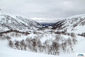 Photo: That's Kamchatka's standard - birch trees everywhere