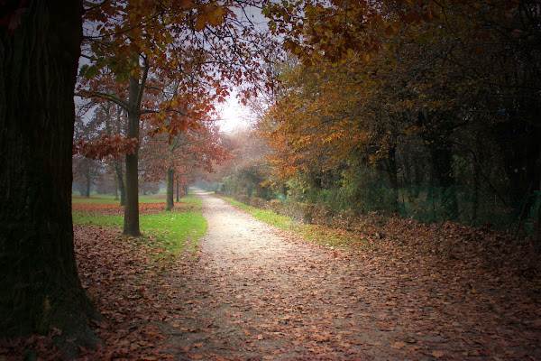 In autunno di gfg