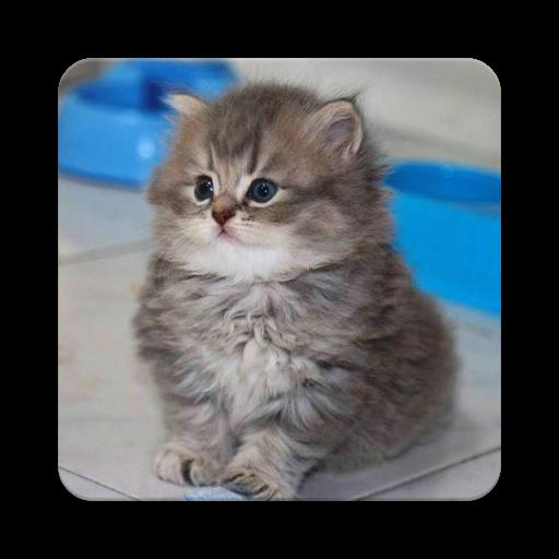 Cute Kitty Cats (app)