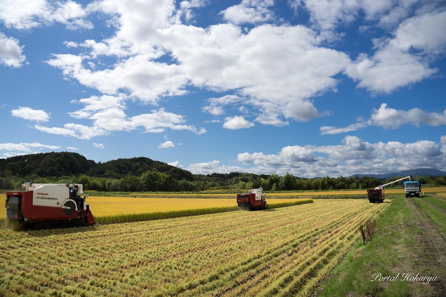 【No.19】水稲の収穫