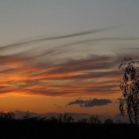 Orange sun down by Louise Corr - Landscapes Sunsets & Sunrises ( sunset sun tree silhouette )