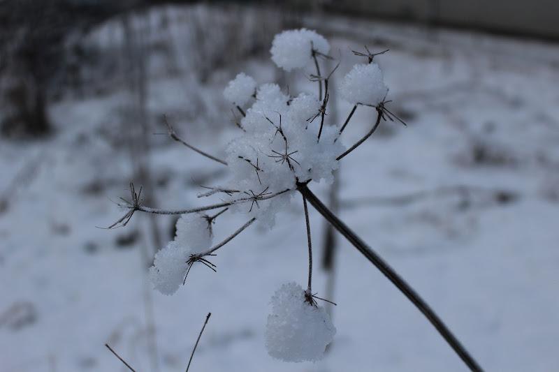 Bianco come la neve di Valentina85