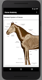 Horse Anatomy Diagrams : Equine Anatomy Screenshot