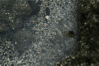 Photo: Spot the fish.  Tide pool in East Oahu.