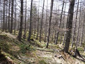 雰囲気の良い森を抜ける