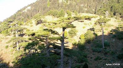 Photo: Önde karaçamlar, arkada sedir ağaçları Fethiye ÇAL Dağı(2.150 M.) zirve etkinliği Muğla - 13.06.2015