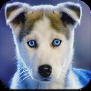 Dog Wallpaper 4K