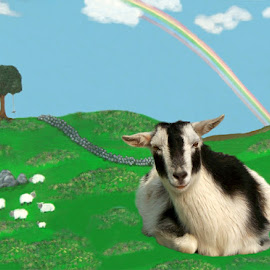 Goat 2 by RMC Rochester - Digital Art Animals ( rainbow, random, nature, animal, goat, abstract, sheep, colors )