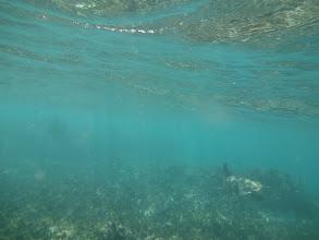 Photo: Vpravo dole želva! O co víc mě to potěšilo, protože jsem byl jedinej z naší výpravy kdo ji potkal