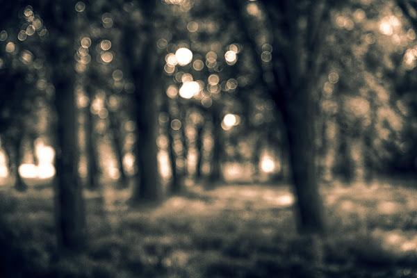 L'oscura foresta  di ocram69