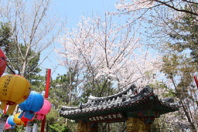 Hàn Quốc của những ngày xuân rực rỡ.