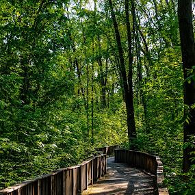 Bridge near Huron River by Chris Mowers - Buildings & Architecture Bridges & Suspended Structures ( michigan, bennett park, bridge, woods, hamburg )