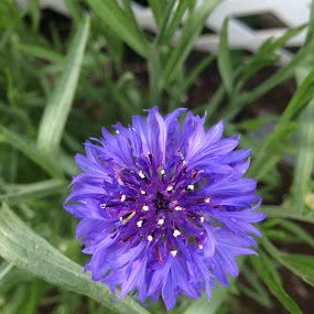 Call Me Pretty by Tammy Pressley - Uncategorized All Uncategorized ( plant, roots, summer, bloom, flower,  )