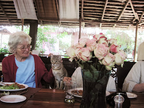 Photo: Cats like Jane even in Africa. Lunch at the River House Restaurant