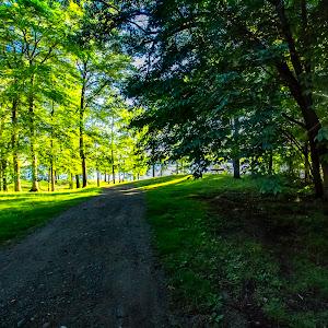 Stony Lake View through trees June 24th 2018 -0112.jpg