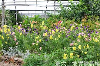 Photo: 拍攝地點: 梅峰-溫帶花卉區 拍攝日期:2013_07_04_FY