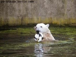 Photo: Knut hat einen Ball gefunden :-)