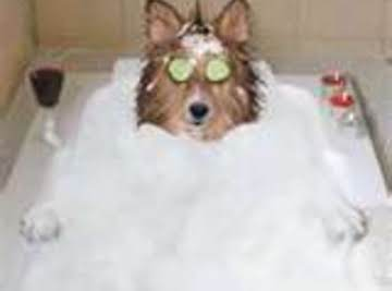 Homemade Flea Shampoo: