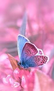 LWP Růžový Motýl - náhled