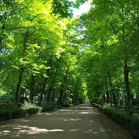 Aranjuez by Joseph Escopin - City,  Street & Park  Vistas ( covered path, park, peace, trees, garden )