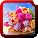 Tulips HD Wallpapers icon