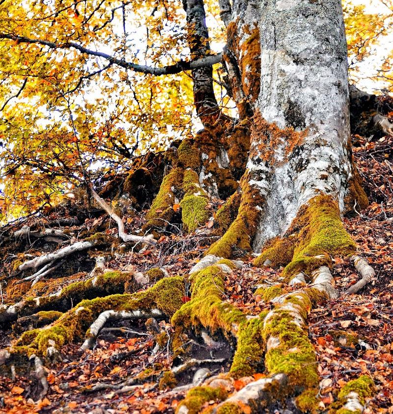 Autumn di Diana Cimino Cocco