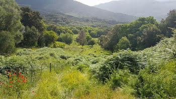 terrain à Casaglione (2A)