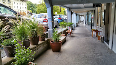 Photo: A few plants to help forget about those pesky cars