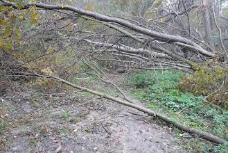 Photo: sok a kidőlt fa