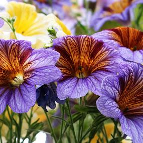 Beauty At Longwood by Roxanne Dean - Flowers Flower Gardens ( purple, petals, garden,  )