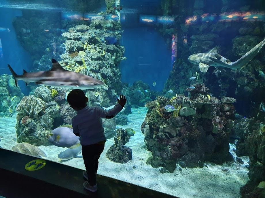 Foto Aquarium - El Acuario de Barcelona 7