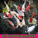 Koi Fish Wallpaper icon