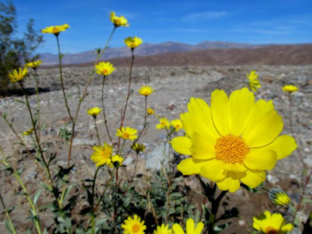 Roadside flowers along CA-190