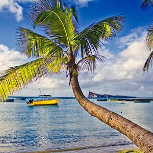 Palm Island.jpg