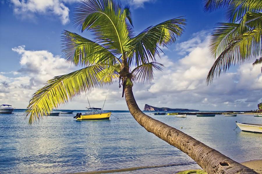 Palm Island by Steven McGregor - Landscapes Travel ( palm island )