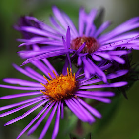 by Lee Chase - Flowers Flowers in the Wild