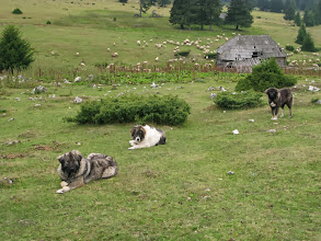Photo: Zijn het geen schatjes, die hondjes?