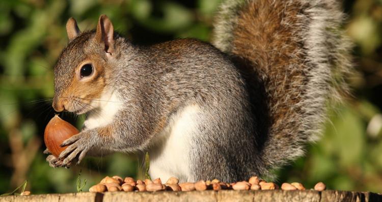 Thiết bị từ Rasberry Pi 3 có khả năng sử dụng trí thông minh nhân tạo để bắt những con sóc.