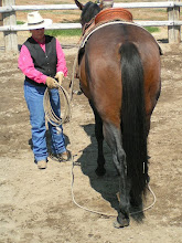 Photo: Here I have backed her up one step, and the loop is between the hind feet.